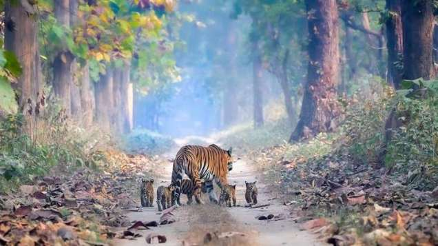 Family is forever (photoo by Siddharth Singh)